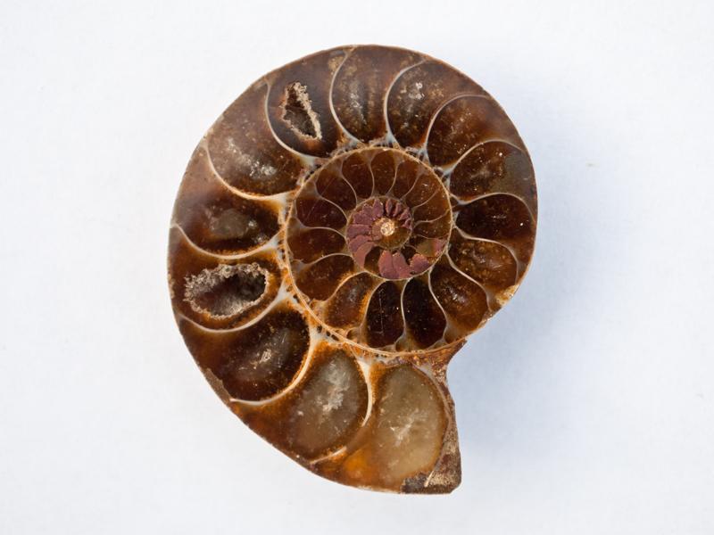 Embedding an Ammonite - Step 1 | Concrete Exchange